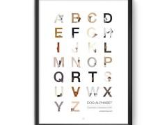 O alfabeto canino